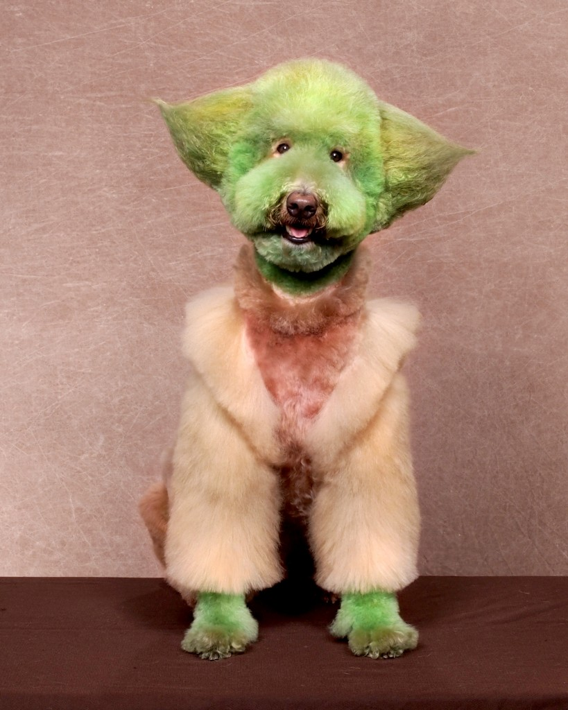 these dogs should be ashamed of their haircuts - muppet monster | guff