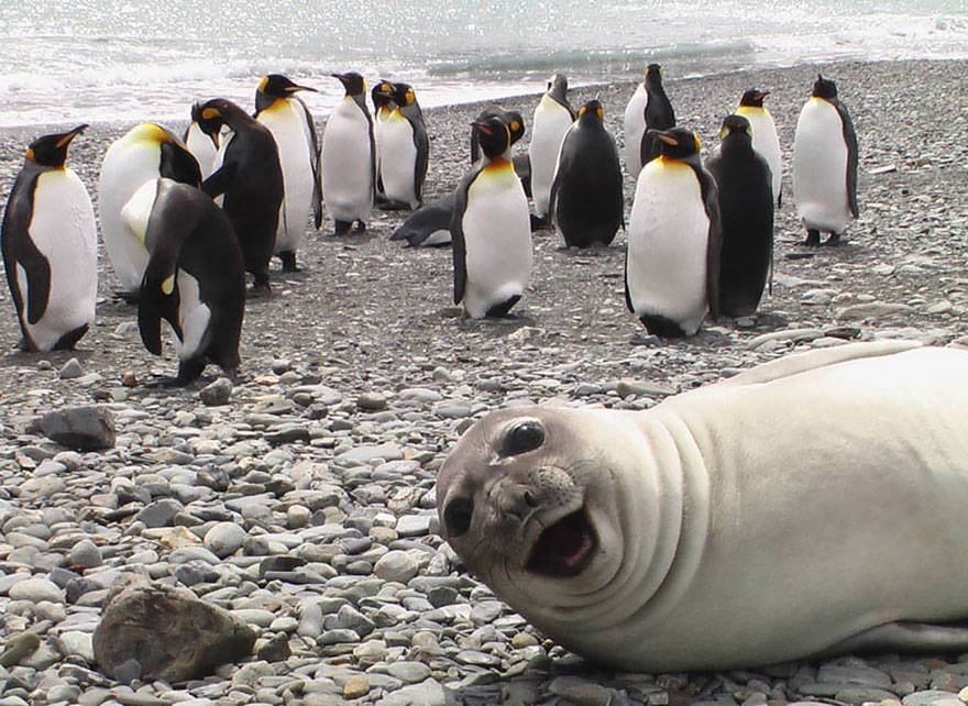 animal photobombs 1